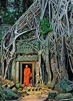 A monk poses in forest roots that devour ruins at Ta Prohm; a Buddhist temple in Siem Reap, Cambodia