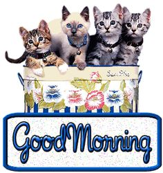 GOOD MORNING   GIF   ... http animatedimagepic com good morning animated image good morning