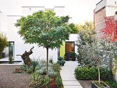 garten im japanischen stil anlegen - bonsai baum | aussen, Best garten ideen