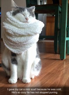 Happy kitty in scarf