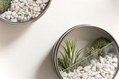 21 Ideas for DIY terrariums