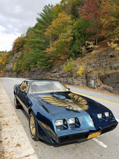 1724 best firebird colors styles ideas images in 2019 muscle rh pinterest com