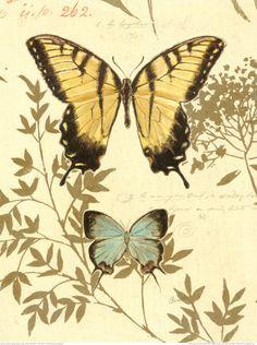 Natures Curiosities 6 Canvas Art - Chad Barrett x Illustration Botanique, Art Et Illustration, Botanical Illustration, Chad Barrett, Framed Artwork, Wall Art Prints, Art Papillon, Impressions Botaniques, Art Carte