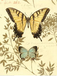 butterflies illustrated in manner of old botanicals.