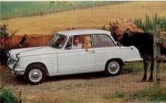 Triumph Herald. Mine was a pale blue one called Myrtle and was already worn out when I bought it in about 1984. I think they probably made them already worn out in the factory, but somehow it used to go (barely). I paid $200 for it and sold it for $210 if I remember correctly.