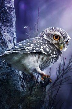 #owls                                                                                                                                                                                 Más
