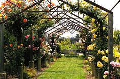 A rose arbour made from steel