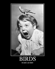 Funny pictures with captions: Birds are scary ny Funny Demotivational Posters funny demotivational pics Vintage Humor, I Smile, Make Me Smile, Scary Birds, Photo Vintage, Demotivational Posters, Haha Funny, Funny Ads, Funny Shit