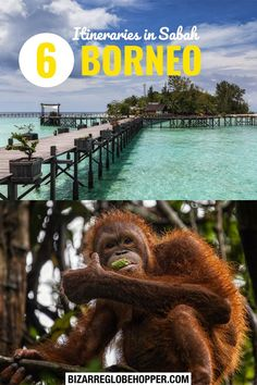 6 Exciting Sabah itineraries from 3-5-day stay to one-week trips. Choose between Borneo rainforest adventures with orangutans, beach life and snorkeling, and river cruises spotting wildlife. Click to find the right destinations for your interests and budget – and start planning your trip to Sabah, Borneo! #Sabah #Borneo #itinerary #Malaysia