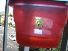 DIY Hummingbird Feeder: Holes & Sugar Water Up Close