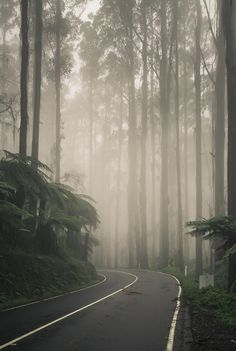 fog | Let's take a #roadtrip! But first, we study: driving-tests.org