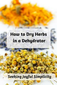 How to dry herbs in a dehydrator - advantages to using a dehydrator versus an oven, what to look for when buying a dehydrator and how to best dry herbs in a dehydrator. - Another! Healthy Herbs, Healthy Recipes, Canned Food Storage, Dehydrated Food, Dehydrated Vegetables, Veggies, Dehydrator Recipes, Fruit Dehydrator, Canning Recipes