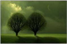 Two Trees. Green Theme, Green Colors, The Colour Of Spring, Two Trees, Color Meanings, Language Of Flowers, Color Psychology, Moon Art, Go Green