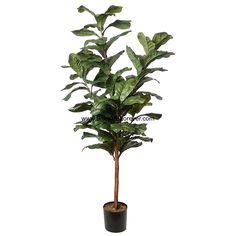 6' Fiddle Leaf Fig Silk Tree w/Pot -Green - DVP110