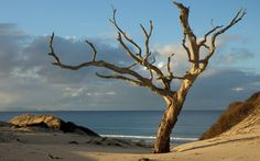 tree_dead_protected_naked_light_horizon_61020_2560x1600.jpg (2560×1600)