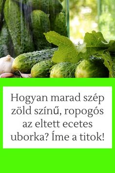 Winter Time, Sprouts, Vegetables, Recipes, Usb, Food, Preserves, Hungary, Veggies