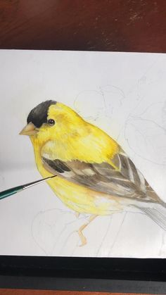 A quick video of my layering process on this Watermedia Goldfinch!