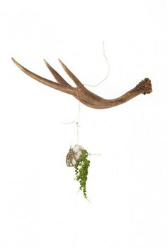 Antler Hanging Plants - Idea