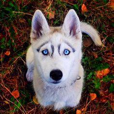 #dog #dogs @top.tags #toptags #puppy #pup #cute #eyes #instagood #dogs_of_instagram #pet #pets #animal #animals #petstagram #petsagram #dogsitting #photooftheday #dogsofinstagram #ilovemydog #instagramdogs #nature #dogstagram #dogoftheday #lovedogs #lovepuppies #hound #adorable #doglover #instapuppy #instadog