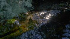 cinemagraph gif water nature cinemagraph stars perfect loop cinemagraphs reflection stream flow videography living stills creek