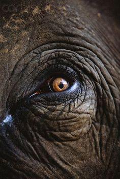 pele de elefante