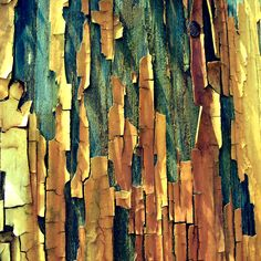 Tree bark http://johnpirilloauthor.blogspot.com/