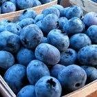When it comes to nutrition, blueberries, loaded with antioxidants are as healthy for you as they are sweet and delicious. But are smoothies the best way to consume them? Nigella, Blueberry Plant, Blueberry Bushes, Blueberry Pancakes, Blueberry Picking, Blueberry Cobbler, Blueberry Wine, Blueberry Breakfast, Breakfast Menu