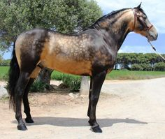 Look at that coat color. I wonder what color this horse is registered as having?