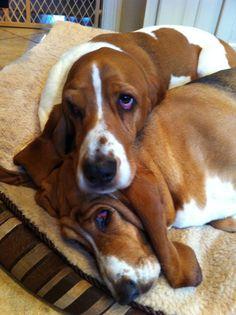 Gus & Bella cuddling - looks so like my Katie Scarlet!
