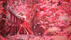 Study in Red by Jojo Samek