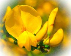 Beautyful flower
