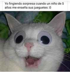 26 Fresh Out Of The Kitchen Caturday Memes For Your Viewing Pleasure Funny Spanish Memes, Spanish Humor, Stupid Funny Memes, Best Memes, Funny Pictures, Jokes, Kawaii, Instagram, Health App