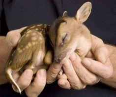 baby deer! so cute!