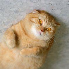 Los gatos más gordos del mundo