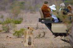 Game drives are one of the most fun, exciting, memorable and special experiences of your safari. Bags Game, Fancy Shoes, Warm Blankets, Field Guide, Day Bag, What To Pack, Falling Down, Bird Watching, Pet Birds