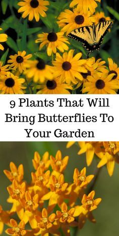 9 Plants That Will Bring Butterflies To Your Garden 9 Pflanzen, die Schmetterlinge in Ihren Garten bringen … This image. Butterfly Garden Plants, Planting Flowers, Butterfly Food, Plants That Attract Butterflies, Butterfly Flowers, Diy Halloween, Hummingbird Garden, Lawn Edging, Garden Pests