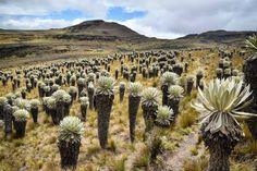 32 Landscapes of Colombia that will leave you breathless - Páramo de Ocetá – Boyacá - Nature Photography Tips, Ocean Photography, Portrait Photography, Wedding Photography, Cool Landscapes, Beautiful Landscapes, Natural Park, Holiday Destinations, Holiday Travel