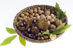 Pomi fructiferi – îi cumperi ca puieți, însă îi poți obține și direct din semințe. Citește mai departe câteva reguli de respectat la plantarea semințelor.