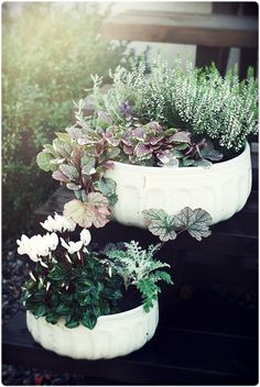 Beautiful potted