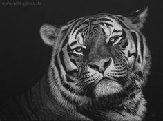 Siberian Spirit - Siberian (Amur) Tiger