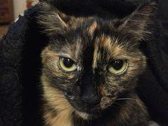 Grissini Katze | Pawshake