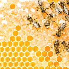 Learn the Health Benefits of Honey - Animals - GRIT Magazine