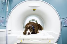 """Gregory Berns Knows What Your Dog Is Thinking (It's Sweet) -- """"You're  dog loves you for you. Not for your food. According to neuroscientist."""""""