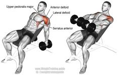"""Incline dumbbell front raise. An isolation exercise. Note: Arms should be raised way above shoulder height. Target muscle: Anterior Deltoid. Synergistic muscles: Lateral Deltoid, Clavicular (Upper) Pectoralis Major, Serratus Anterior, and Middle and Lower Trapezius. There are different ways in which to perform this exercise. Visit site and read the """"Comments and tips"""" to learn more."""