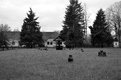 Horezu - Romania Photo & Copyright: Iulia-Maria Kycyku Artistic Photography, Romania, Monochrome, Country Roads, Spaces, Art Photography, Fine Art Photography, Monochrome Painting