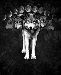 Wolf Moon by Heather Bird. Lobos sob a Lua Wolf Tattoos, Der Steppenwolf, Moon Names, Husky, Wolf Spirit Animal, Howl At The Moon, She Wolf, Wolf Girl, Wolf Pictures