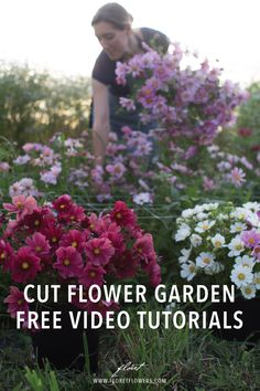 Organic Gardening Learn how to grow, harvest, and arrange stunning seasonal blooms with free video tutorials from Erin Benzakein, author of the award-winning book, Floret Farm's Cut Flower Garden. Growing Flowers, Cut Flowers, Wild Flowers, Planting Flowers, Summer Flowers, Cut Flower Garden, Beautiful Flowers Garden, Flower Gardening, Cut Garden