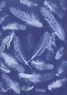 Anna Atkins: The First Woman Photographer - cyanotype