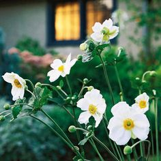 A great cut flower for the fall garden, Japanese anemone produces cup-shaped blooms in shades of pink and white: http://www.bhg.com/gardening/design/color/white-flower-garden-ideas/?socsrc=bhgpin051914japaneseanemone&page=4