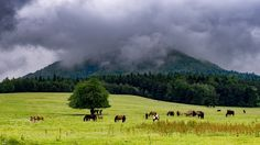 Horses on mountain meadow - Horses in rainy day in mountain meadow near Izby in Beskid Niski